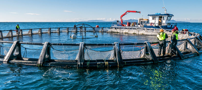 DiveSystem Professional Supplies: Aquaculture and Fishing industry 4